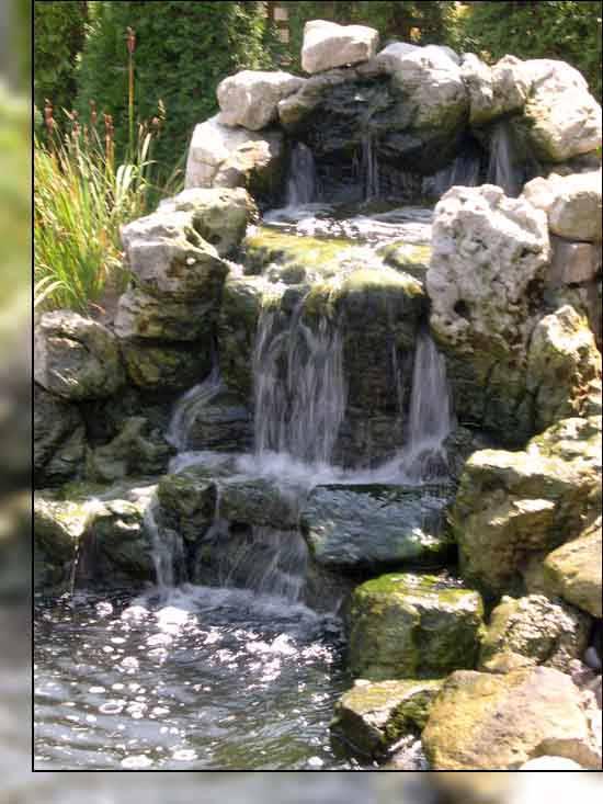 Clarke Koi Pond Photographs Good Koi Pictures