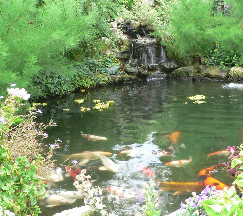 pond pictures netting koi picture waterfalls