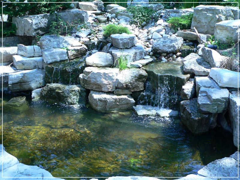 Clarke Koi Ponds Monthly Pond Photo