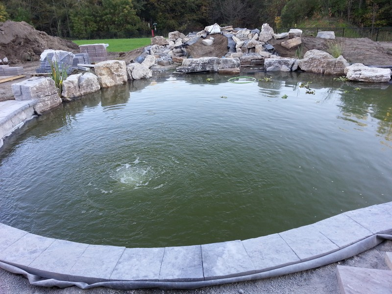 Clarke koi news pond news 2013 for How deep should a koi pond be
