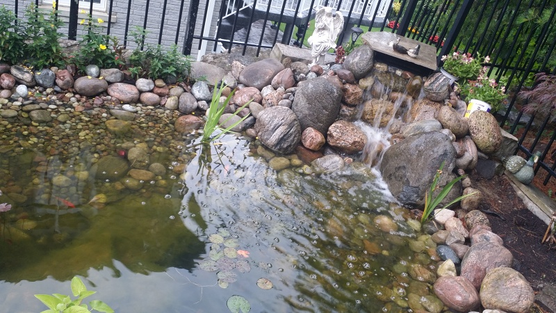 Koi pond services pond maintenance construction toronto for Fish pond maintenance
