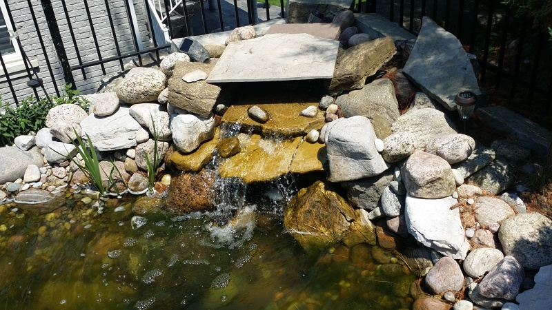 Koi pond services pond maintenance construction toronto for Fish pond cleaning service