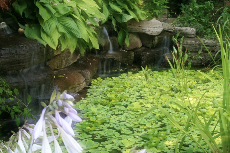 Photographs of a koi pond build for Above ground koi ponds for sale