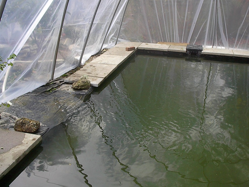 Photographs of a koi pond build for Koi pool cover