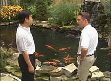 koi pond video