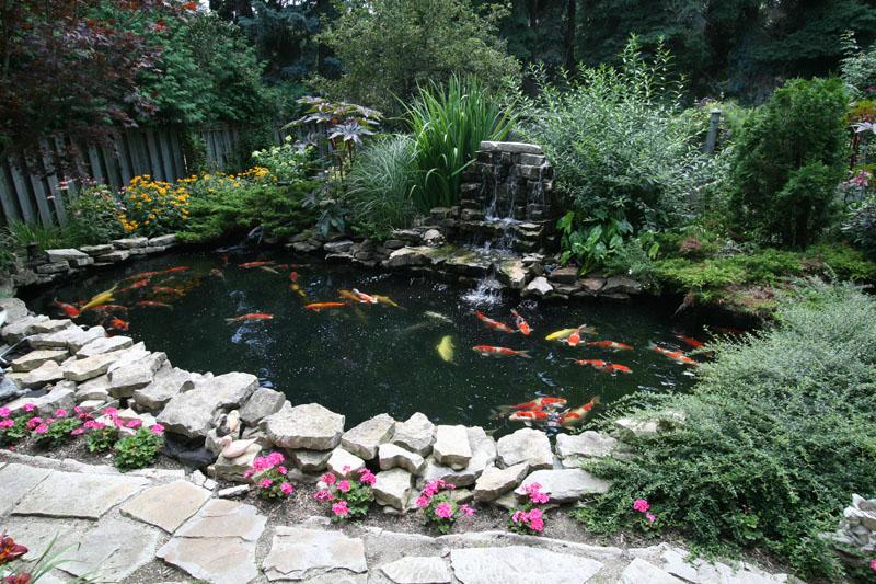 Clarke koi ponds photo gallery for 50 gallon koi pond