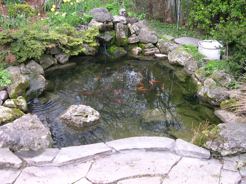 Gta pond construction pictures koi gallery for How deep should a koi pond be