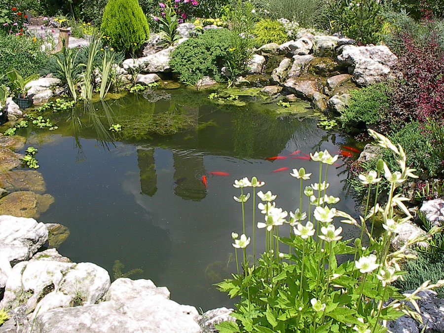 Gta pond construction pictures koi gallery for Koi show pools