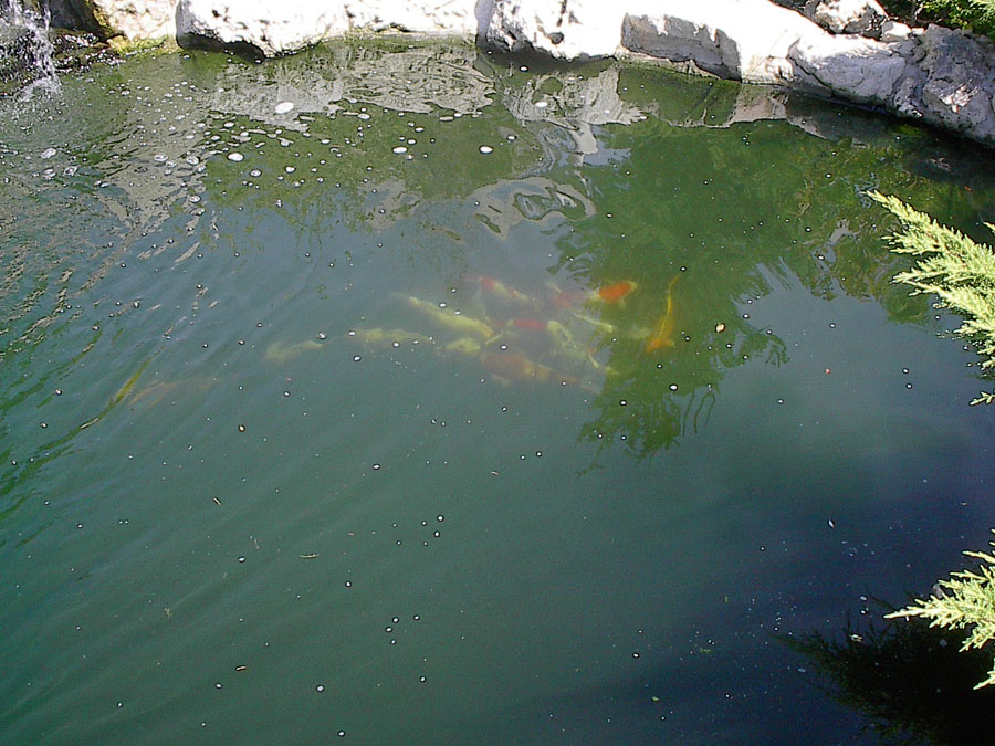 Mississauga pond photo gallery deep ponds for Garden pond overflow pipe