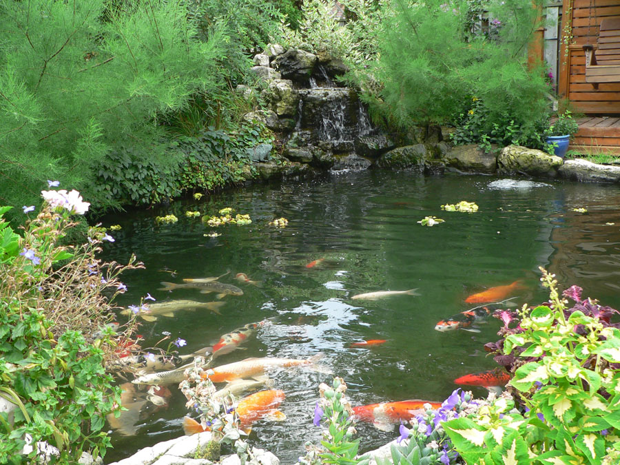 Mississauga pond photo gallery deep ponds for How deep should a koi pond be