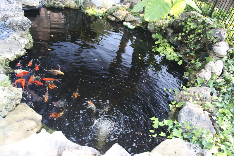Toronto koi pond builders for Koi pond jets