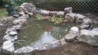 This was a rebuilt to improve filtration and make the pond larger. Some older koi make their home here