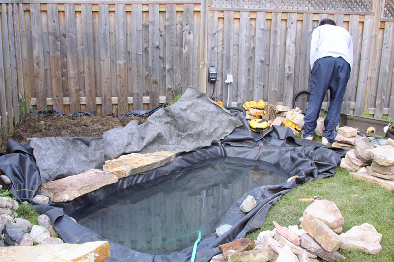 Toronto pond constructions fundamentals and techniques for Building a koi pond step by step